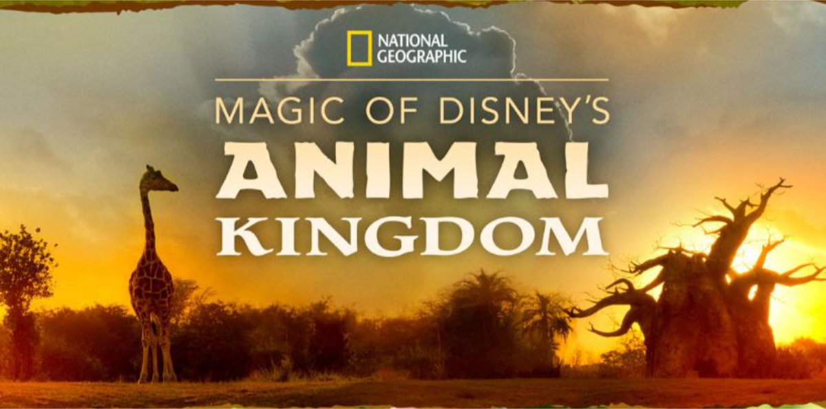 New Magic Of Animal Kingdom Series Coming To Disney+